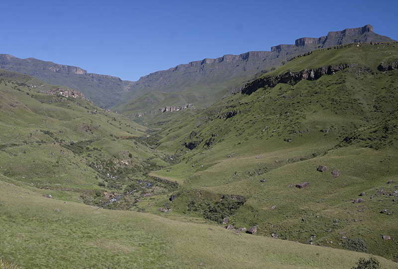 SPAM project – The Sani Pass Alien plants Monitoring Project